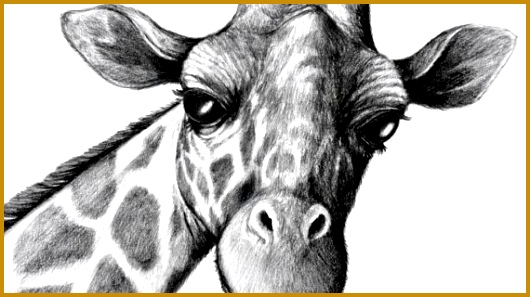 Pencil Drawings Animals Drawing That Are Cool Pinterest Pencil Drawings Animals 530297
