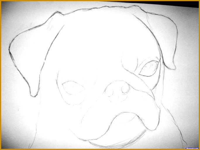 how to draw a realistic pug step 2 1 5 Cool DrawingsEasy Drawings AnimalsAnimal 684513