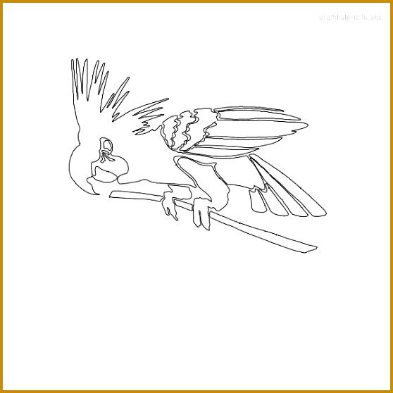 Bird Graffiti Stencils 558558