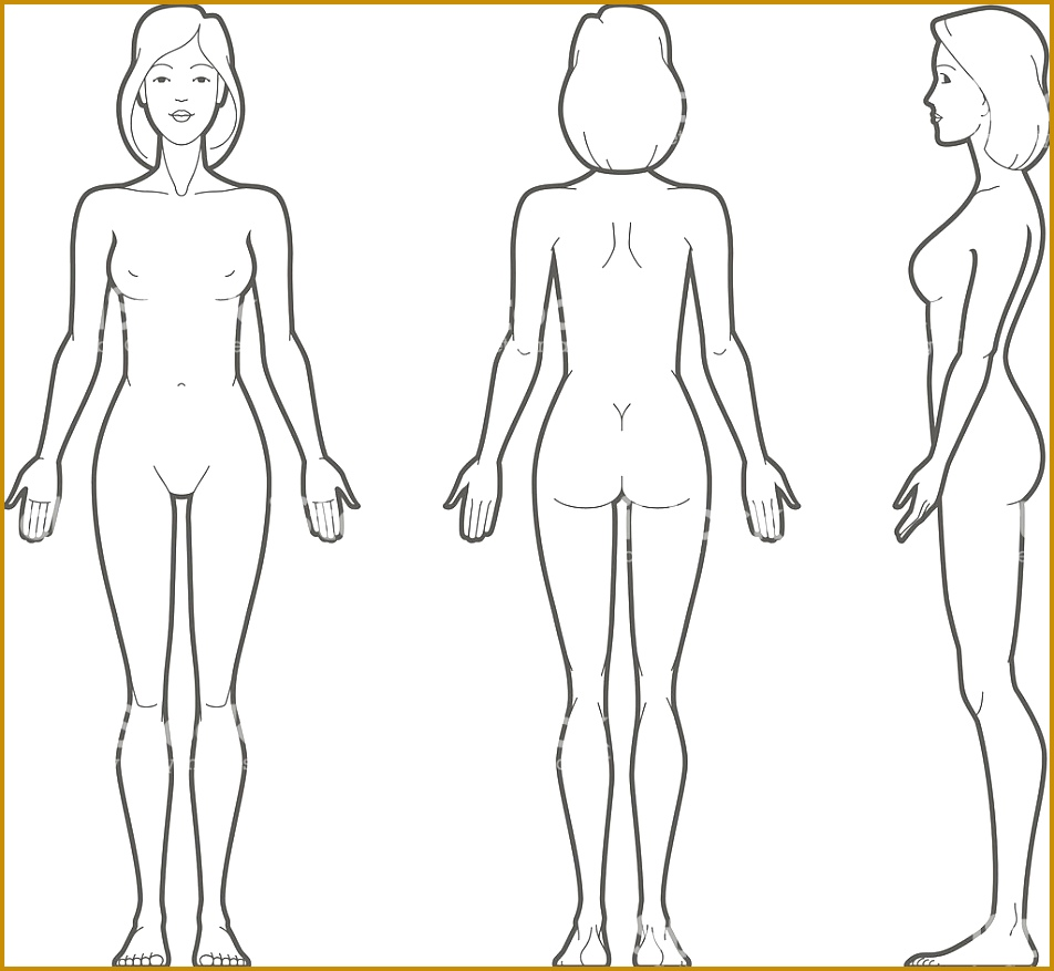 outline sketch of human body 51724 female body stock vector art