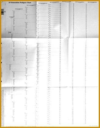 15 Generation Pedigree Chart 10 pack 326418