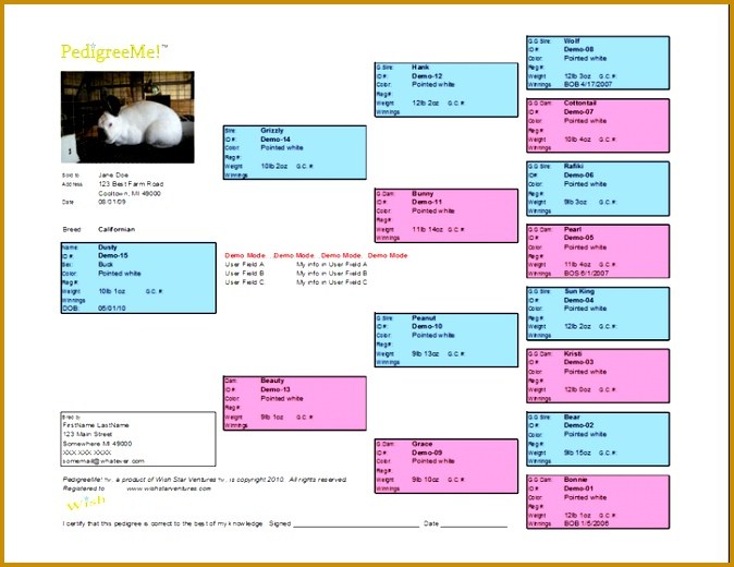 Rabbit Pedigree Software Features Easy and Fast Rabbit Pedigree Charts 674520