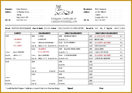 Pedigree Certificate Template Free 396559
