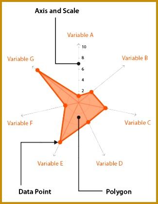 Anatomy radar chart 419325