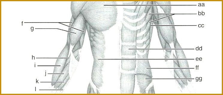 3 Anatomical Terminology Worksheet | FabTemplatez