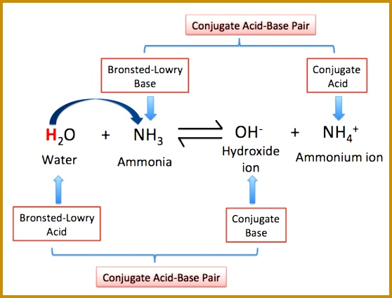 3 Bronsted Lowry Acids and Bases Worksheet   FabTemplatez