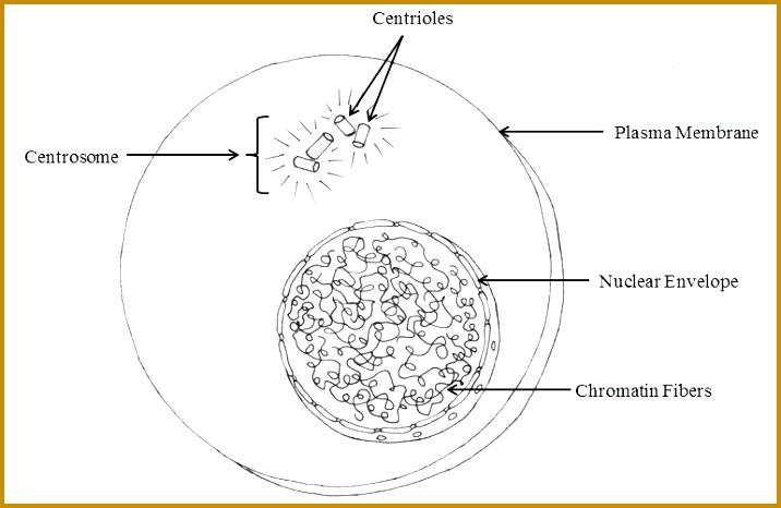 5 Cell Membrane Coloring Worksheet | FabTemplatez