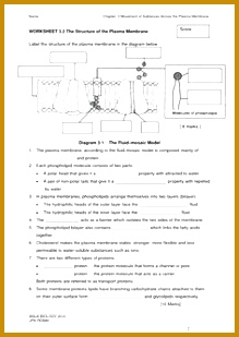 cell membrane worksheet Google Search 309219