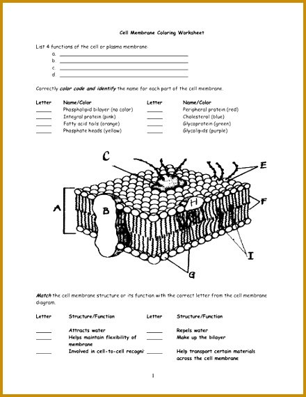 cell membrane worksheet Google Search 570440