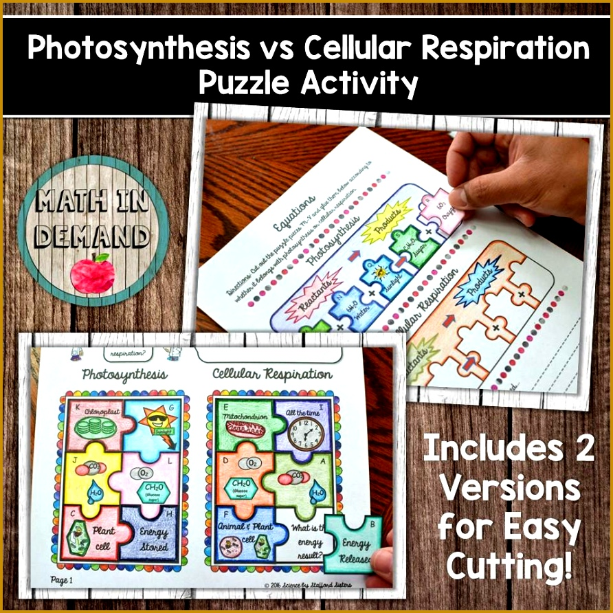 synthesis vs Cellular Respiration Puzzle Activity 580x 2x 892892