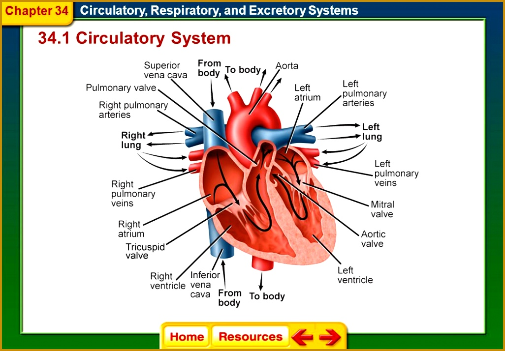 34 1 Circulatory System Chapter 34 7141026