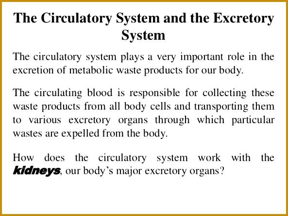 77 The Circulatory System 445593
