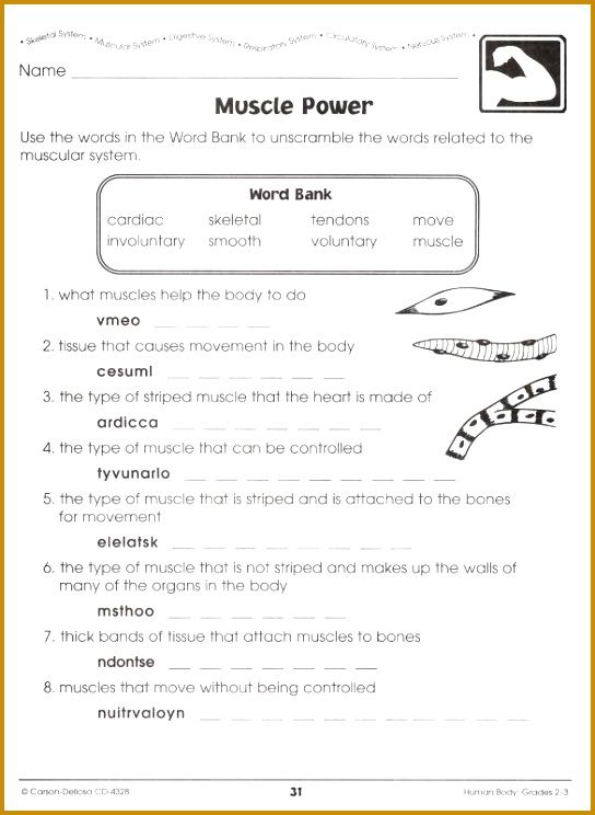 How The Body Works The Muscles Worksheet Answers 744544
