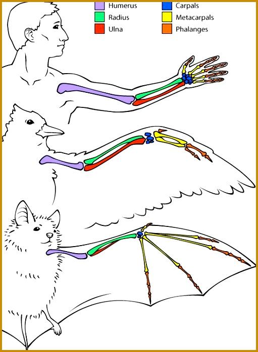 6 Comparative Anatomy Worksheet   FabTemplatez
