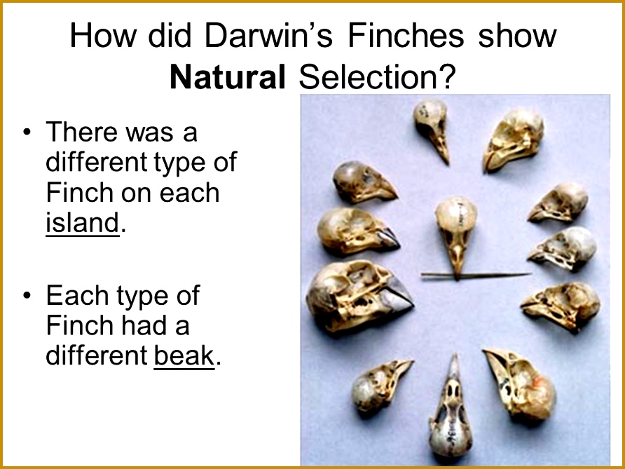 3 Darwins Natural Selection Worksheet 2