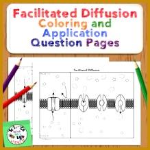 6 Diffusion and Osmosis Worksheet   FabTemplatez