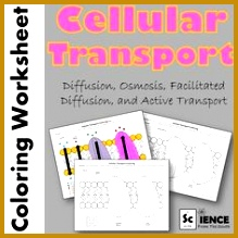Cell Membrane Transport Worksheet Osmosis Diffusion 219219