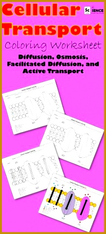 Cell Membrane Transport Worksheet Osmosis Diffusion 219482