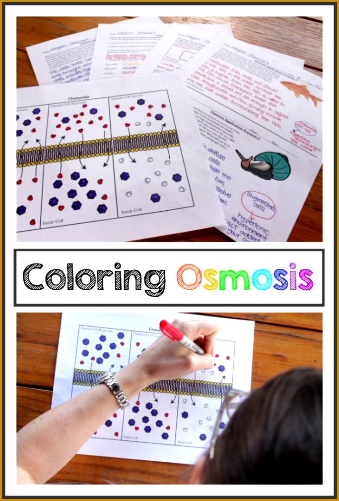 Cell Transport Osmosis Coloring Page or Poster and Application Question Pages 1008683