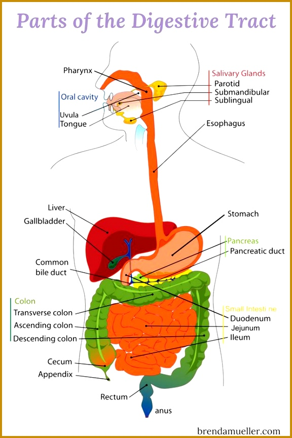 7 Autoimmune Disorders that Affect the Digestive Tract click thru to learn more about these 864576