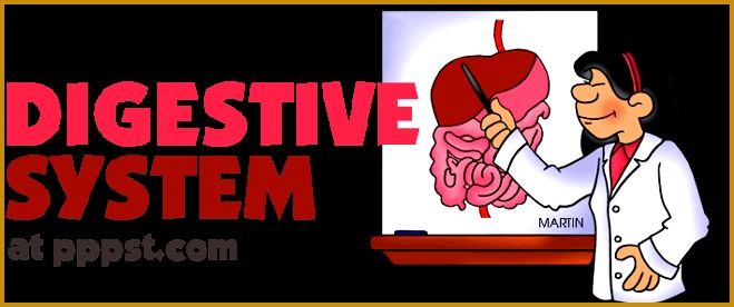 Digestive System Human Body FREE Presentations in PowerPoint format Free Interactives and Games 276659