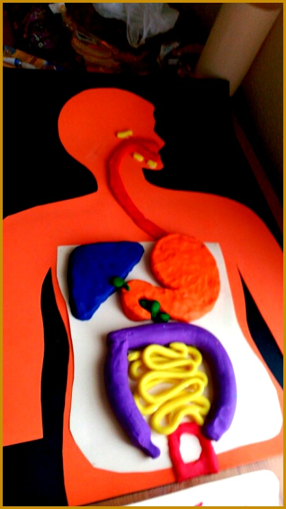 Digestive system with modelling clay By Neus 744418
