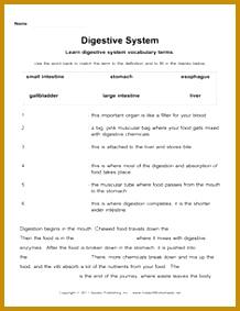 Digestive System 283218