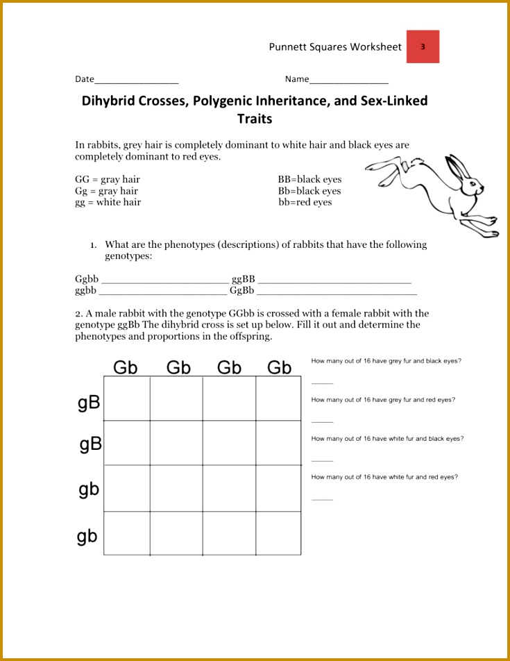 5 Dihybrid Cross Worksheet Answers | FabTemplatez
