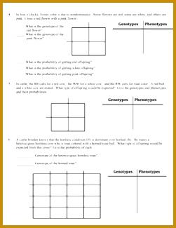 5 Dihybrid Cross Worksheet Answers | FabTemplatez