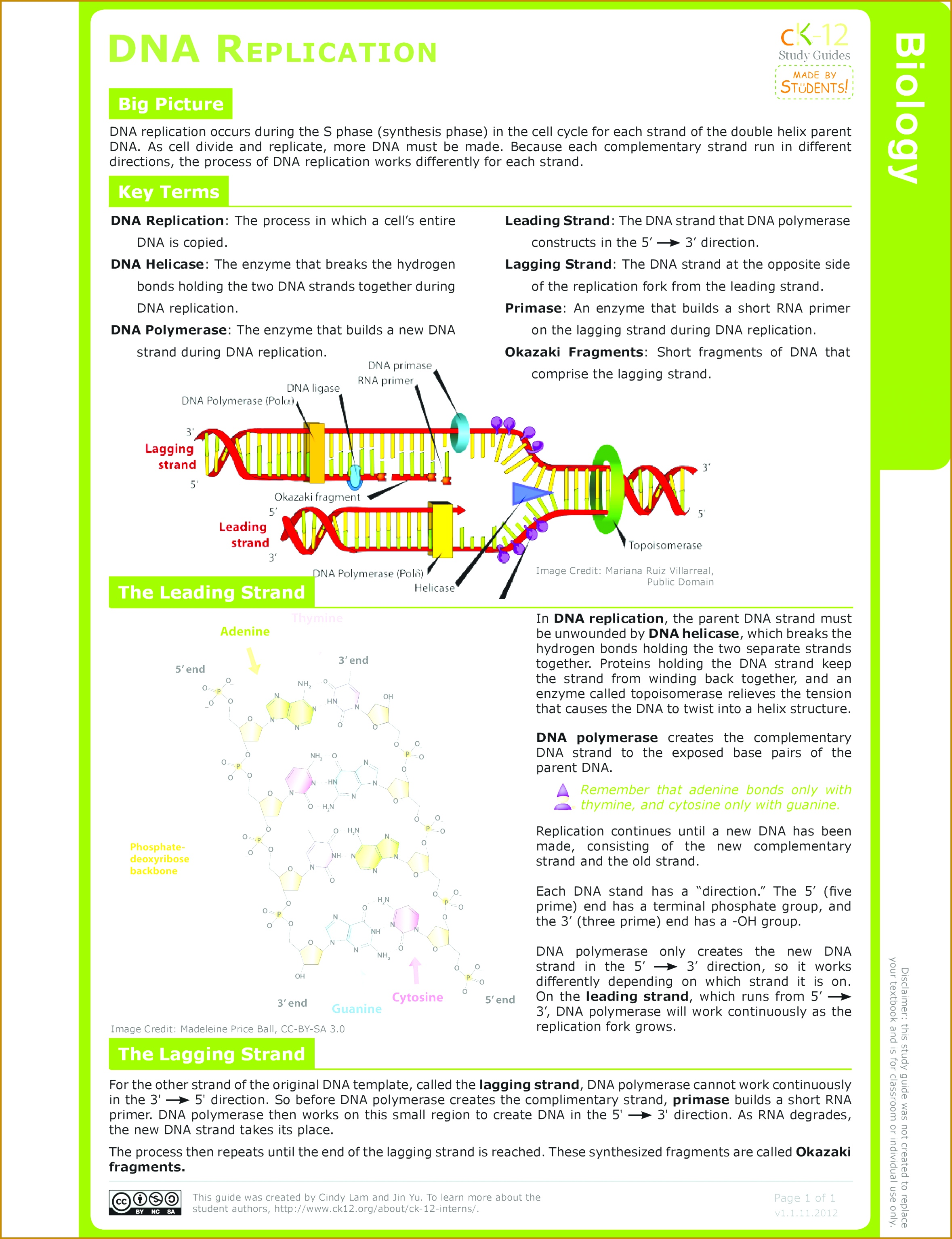 5 Dna Base Pairing Worksheet Answers | FabTemplatez