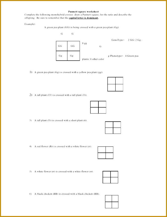 Punnett Square Worksheet by kpolson via slideshare 677876