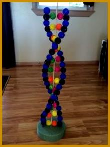 High School Biology 3D DNA project Materials 24 gauge wire 72 styrofoam balls Tempura paint 292219