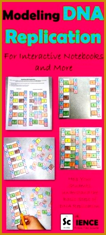 Help your students learn the basic steps of DNA Replication with this interactive notebook activity 482219