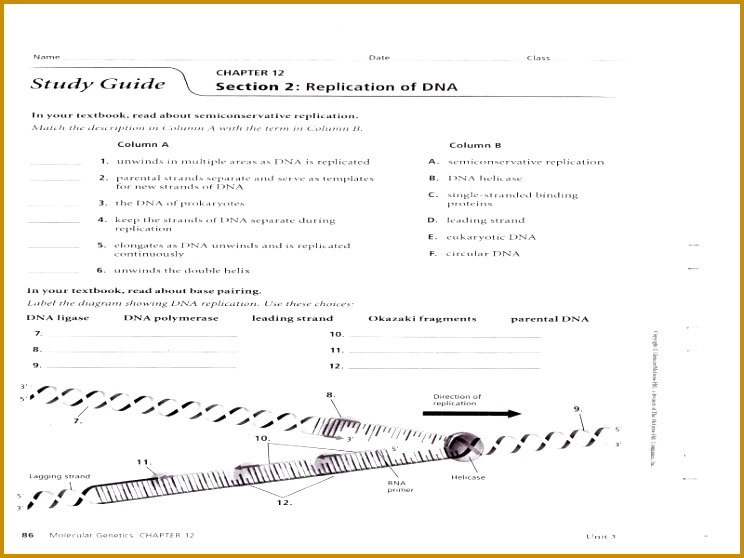 4 Dna Replication Worksheet Answers | FabTemplatez