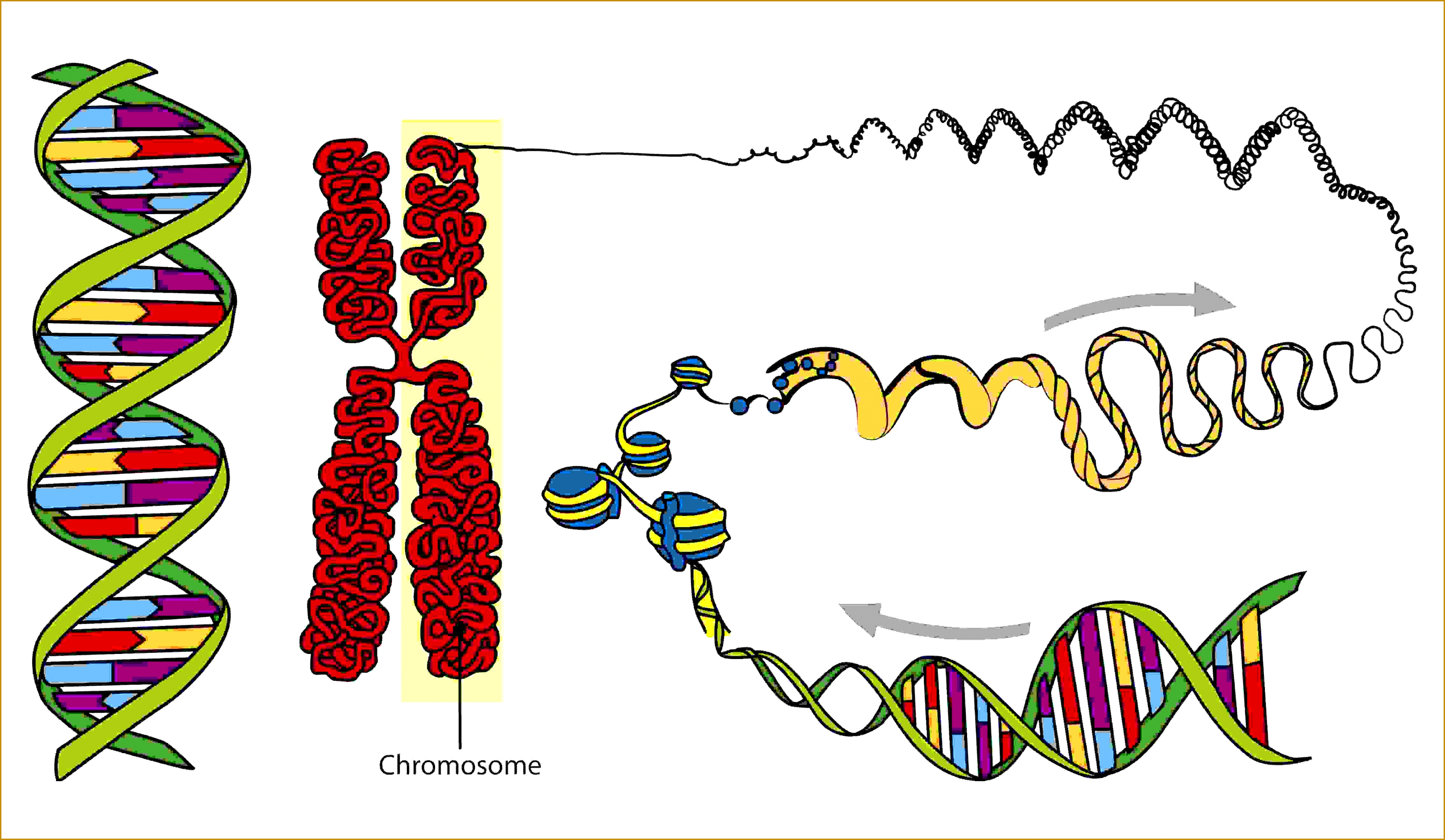 Structure of Nucleic Acids 24564224