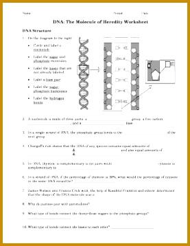 dnathe molecule heredity worksheet 277358