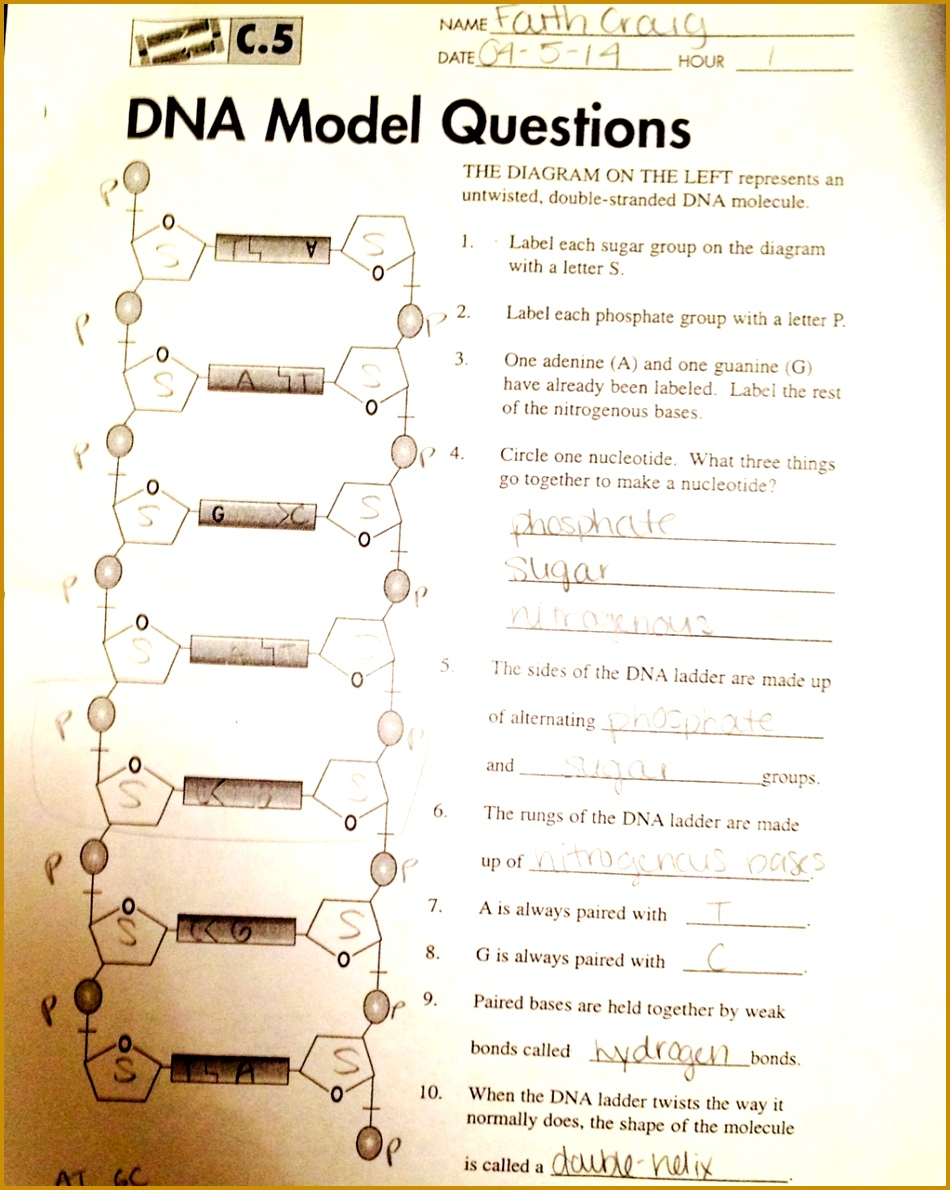 A worksheet I filled in on DNA structure 1190950