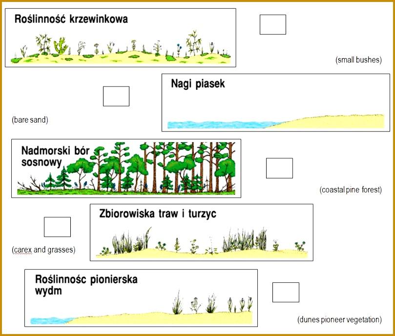 5 Ecological Succession Worksheet Fabtemplatez