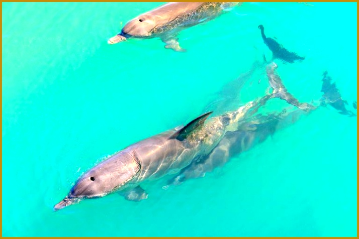 dolphins in water 476714