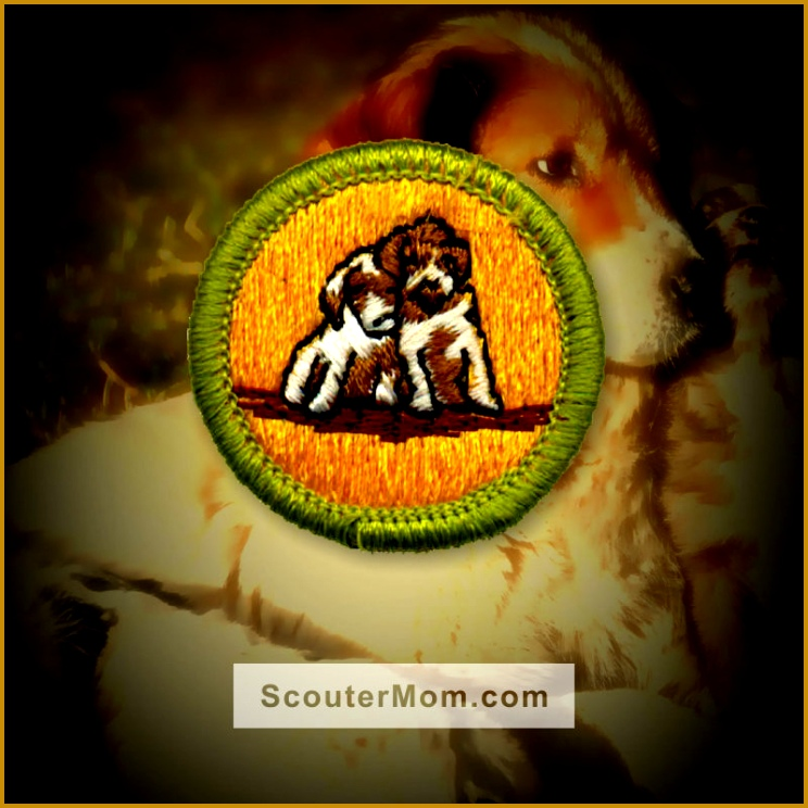 dog care merit badge worksheet the best and most prehensive 744744