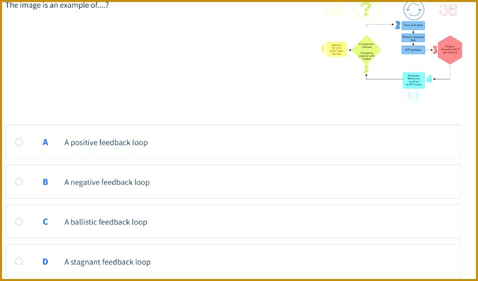 32 Feedback Mechanisms Worksheet Answers - Notutahituq ...