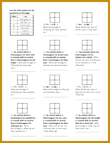Genotypes and Punnett Square Worksheets 283219