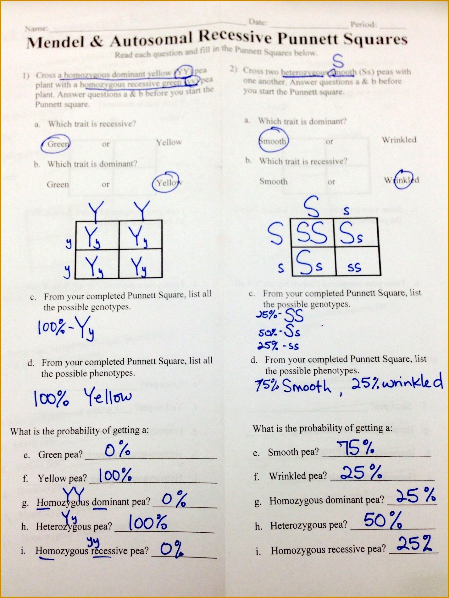 Mendel And Meiosis Worksheet Answers Worksheets for all Download and Worksheets 19041428
