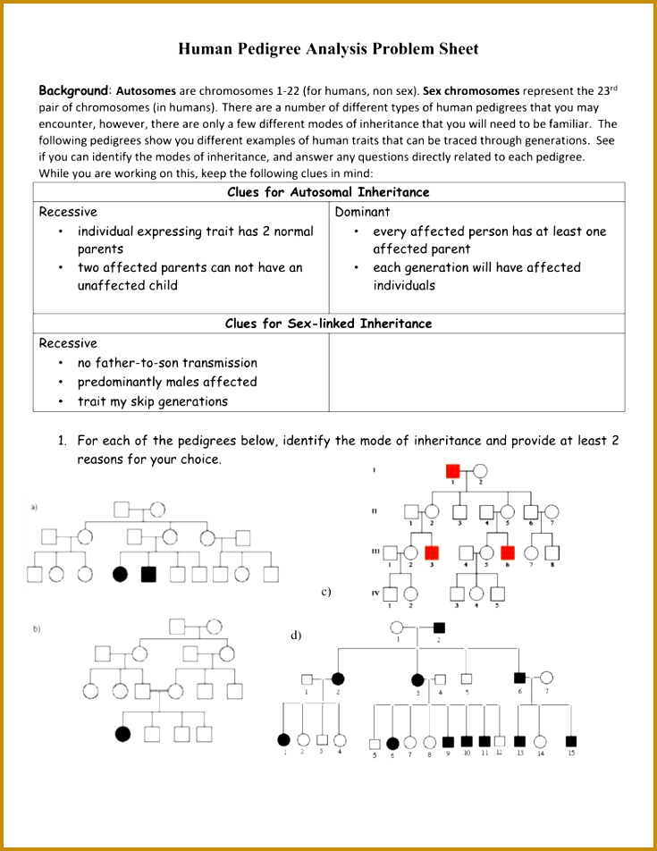 5 Human Pedigrees Worksheet Answers | FabTemplatez