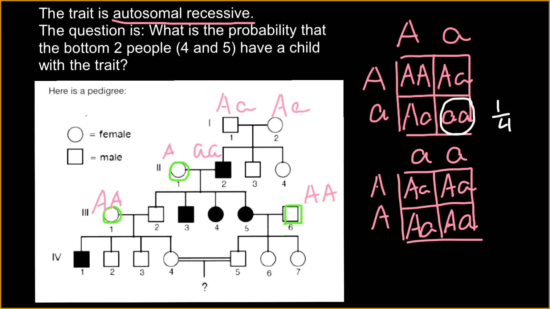 31 E Bio Worksheet Pedigree Analysis In Genetics ...