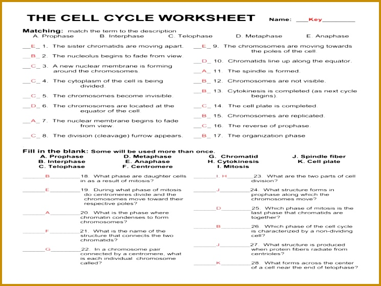 Mutations Worksheet New Cell Cycle Mitosis Meiosis and Mutations Worksheet Answers 558744