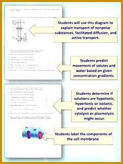 Cell Membrane Transport Worksheet Osmosis Diffusion 244325