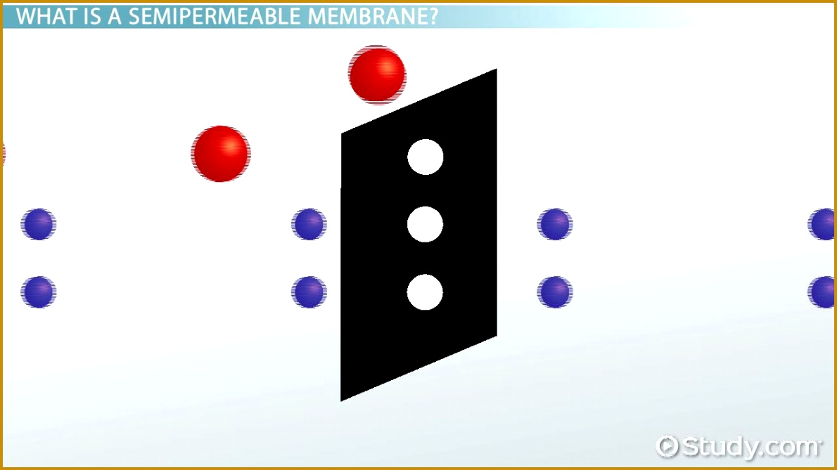 Semipermeable Membrane Definition & Overview Video & Lesson Transcript 6691190