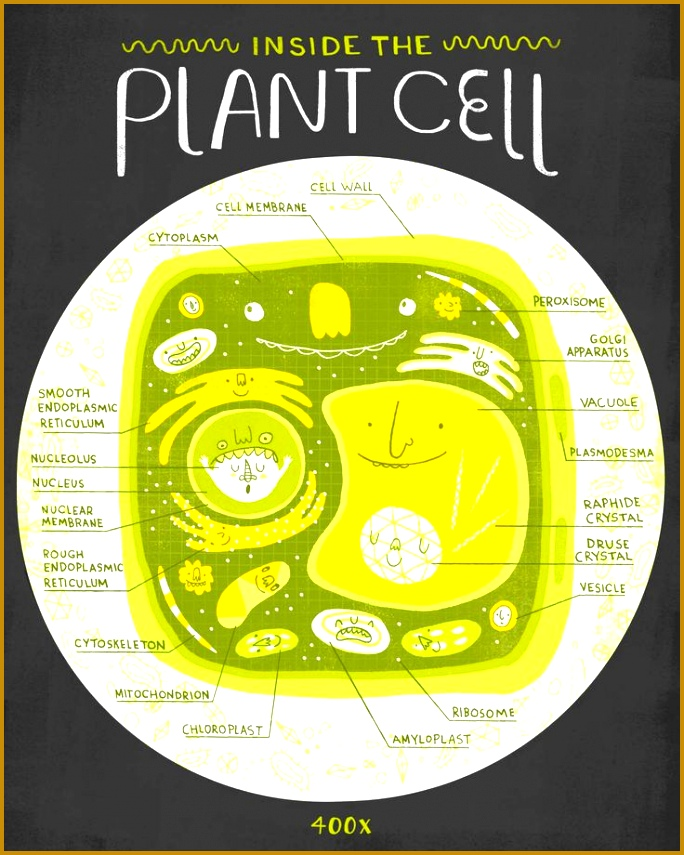 CELLS Rachel Ignotofsky Design 855684