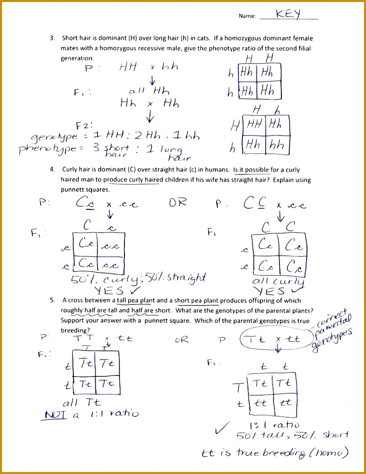 5 Monohybrid Cross Worksheet | FabTemplatez